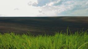 MOVIMENTO DA ZORRA: Grama verde e campos arados pretos vídeos de arquivo