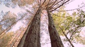 Movimento del carrello del cursore lungo un pavimento verde della foresta che mostra il sole che viene con archivi video