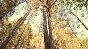 Movimento del carrello del cursore lungo un pavimento verde della foresta che mostra il sole che viene con video d archivio