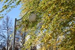 Movimento del vento i rami della betulla fotografia stock