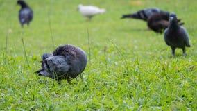 Movimento della colomba Fotografia Stock Libera da Diritti