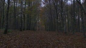 Movimento della macchina fotografica lungo la foresta all'autunno archivi video