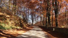 Movimento della macchina fotografica sulla strada nella foresta di autunno e sul sole che splende attraverso il fogliame video d archivio