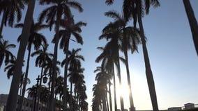 Movimento della macchina fotografica tramite il vicolo della palma reale a West Palm Beach, Florida video d archivio