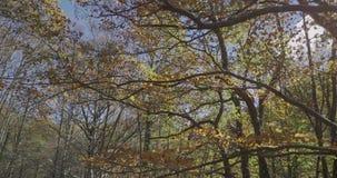 Movimento descendente com ramos das árvores perto de nós vídeos de arquivo