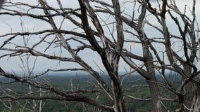Movimento di effetto di parallasse della macchina fotografica Alberi morti asciutti nella catastrofe ecologica della foresta La f stock footage