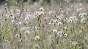 Movimento di molti wildflowers nel vento stock footage