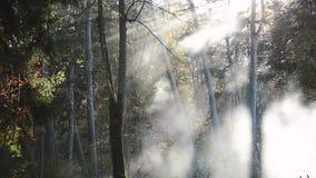 Movimento di nebbia bianca nella foresta soleggiata archivi video
