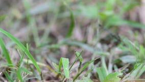 Movimento di una libellula sull'erba video d archivio