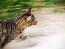 Movimento do gato fotografia de stock