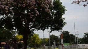 Movimento e movimento da árvore de trombeta rosado do vento no jardim exterior filme