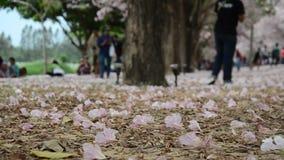Movimento e movimento da árvore de trombeta rosado do vento no jardim exterior video estoque