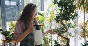 Movimento lento da menina atrativa no avental que pulveriza a planta verde na loja de flor video estoque