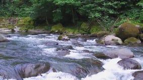 Movimento lento da metragem de Geórgia do parque do mtirala da natureza do verão da montanha do rio da montanha filme