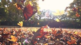 Movimento lento das folhas coloridas da natureza do outono das folhas de outono video estoque