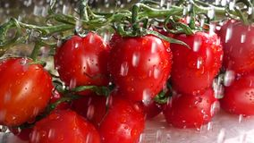 Movimento lento de tomates de cereja video estoque