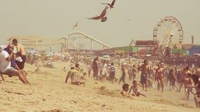 Movimento lento dei gabbiani e dei frequentatori della spiaggia stock footage
