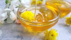 Movimento lento di fioritura di melo della sgocciolatura fresca del miele stock footage