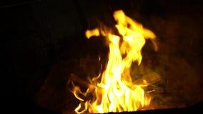 Movimento lento di un fuoco caldo di urlo e dei carboni rossi in un fuoco di accampamento Fiamma luminosa stock footage