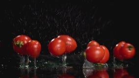 Movimento lento dos tomates que caem na água no fundo escuro com espaço da cópia filme