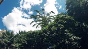 Movimento lento HD completo que move-se ao longo dos arbustos tropicos verdes com uma palma alta que vibra com vento no céu azul  filme