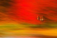 Movimento nas cores - Autumn Abstract - cursos bonitos Imagens de Stock Royalty Free