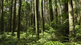 Movimento noroeste pacífico da câmera da floresta tropical vídeos de arquivo