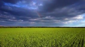 Movimento rápido próximo sobre o campo verde sob o céu nebuloso escuro video estoque