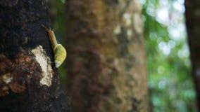 Movimento strisciante della lumaca sull'albero con il fondo di Bokeh stock footage