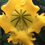 movimento strisciante delle formiche su un fiore giallo Fotografia Stock