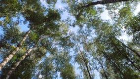 Movimento suave na floresta verde vídeos de arquivo