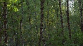 Movimento suave na floresta verde filme