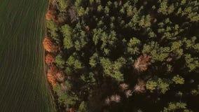 Movimentos da câmera aérea da floresta do outono aos campos Imagens de vídeo luzes do sol da manhã Natureza bonita video estoque