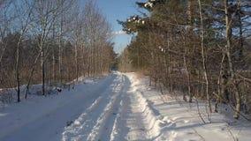 Movimiento aéreo sobre el camino rural vacío en bosque del invierno almacen de video
