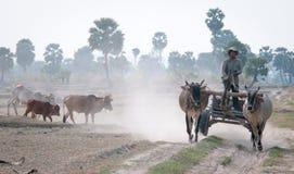 Movimiento asiático del carro de los paseos del hombre en la carretera nacional Imagen de archivo libre de regalías