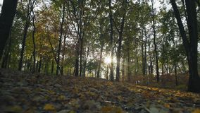Movimiento, Autumn Forest en Sunny Weather Guttered por el follaje el caer almacen de metraje de vídeo