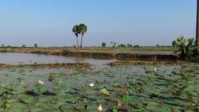 Movimiento bajo aéreo a través de lirios de agua en Asia con las palmeras almacen de metraje de vídeo