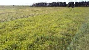 Movimiento cercano sobre la hierba para hacer heno las franjas y los tractores almacen de metraje de vídeo