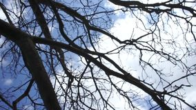 Movimiento circular de un árbol contra el cielo almacen de video