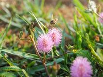 Movimiento de la abeja Imagenes de archivo