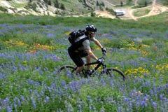 Movimiento de la bici de montaña foto de archivo