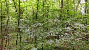 Movimiento de la cámara en el bosque metrajes