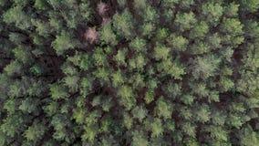 Movimiento de la cámara en el bosque almacen de metraje de vídeo