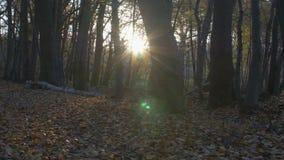 Movimiento de la cámara a lo largo del bosque en el otoño almacen de metraje de vídeo