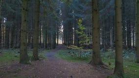 Movimiento de la cámara a lo largo de las hojas en el bosque almacen de metraje de vídeo