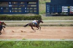 Movimiento de la carrera de caballos antes del final fotos de archivo libres de regalías