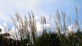 Movimiento de la hierba de la flor con el cielo azul metrajes