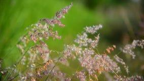 Movimiento de la hierba de la flor por el viento almacen de video