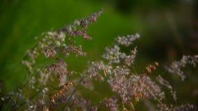 Movimiento de la hierba de la flor por el viento almacen de metraje de vídeo