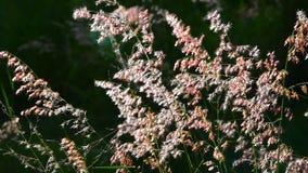 Movimiento de la hierba de la flor por el viento metrajes